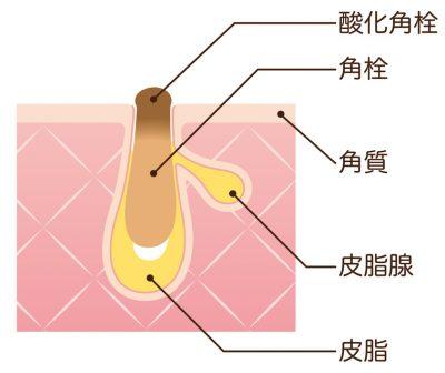 肌の毛穴を横から見た断面図
