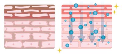 肌の状態の比較