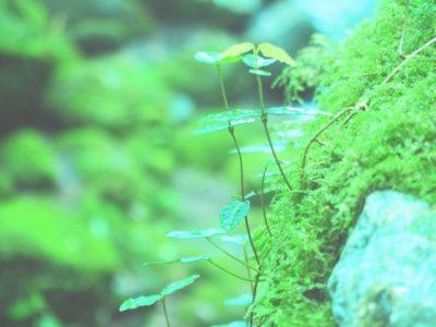 nature001