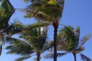 強風にあおられる木