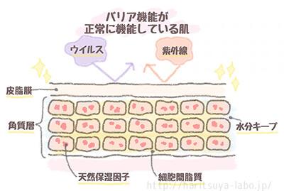 バリア機能が正常に機能しているイメージイラスト