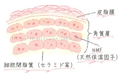 角質層内のイメージイラスト