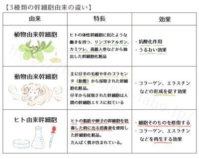 植物幹細胞、動物幹細胞、ヒト由来幹細胞の違い