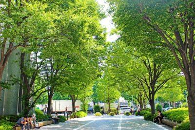 緑の木に囲まれた道路の昼下がり