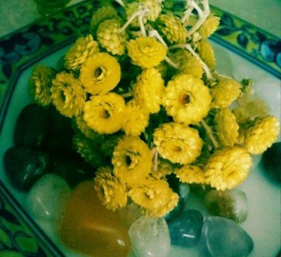 イモーテルの花