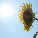 知っていますか? 日焼けするまでの時間や日焼けしやすい時間帯