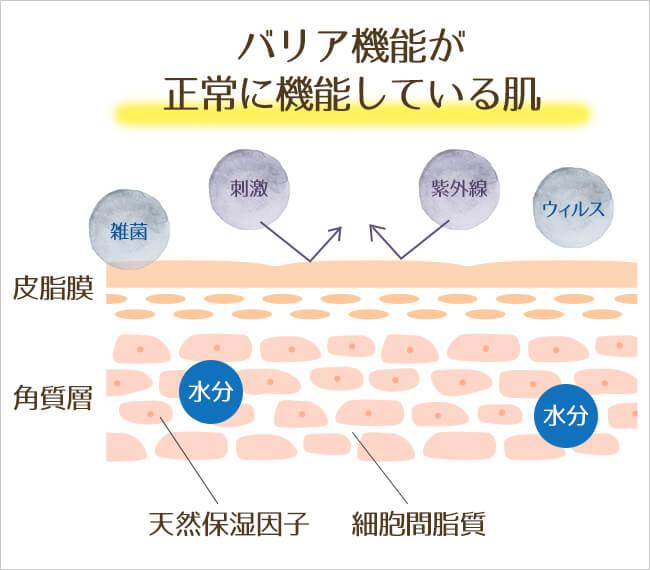 バリア機能が正常に機能している肌のイラスト