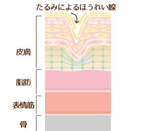 皮膚の構造とたるみによるほうれい線