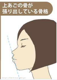 上顎の骨格イラスト