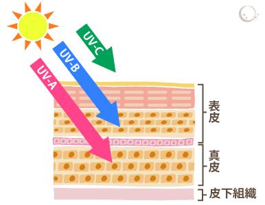 3種類に分かれる紫外線 イラスト
