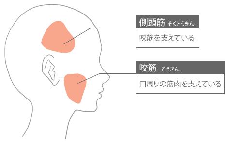 顔の深層筋