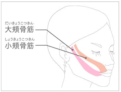 小頬骨筋と大頬骨筋