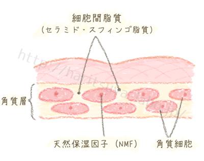 角質層のイメージイラスト