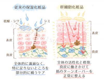 従来の化粧品と幹細胞化粧品の違い