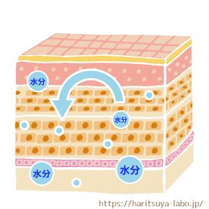皮膚断面図 水分