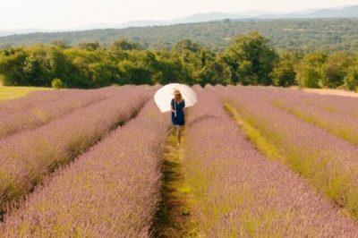 ラベンダー畑で日傘を差す女性